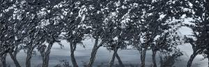 Čierne stromy