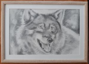 portrét vlka
